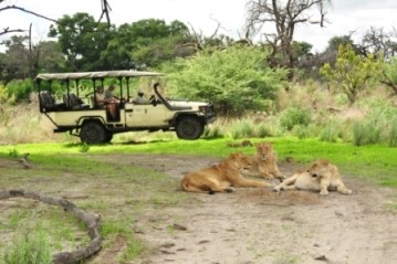 Guests from Sanctuary Chief's camp view lion during a game drive on Chief's Island in Moremi